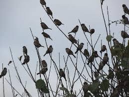 シルエットの雀